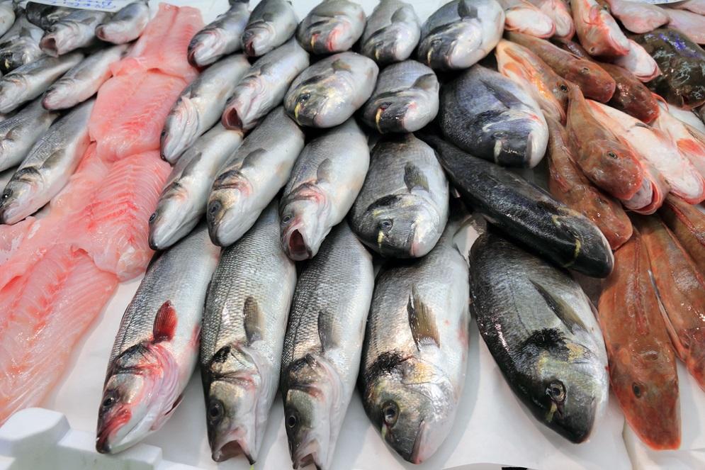 אחת ולתמיד: אילו דגים מומלצים מבחינה תזונתית?