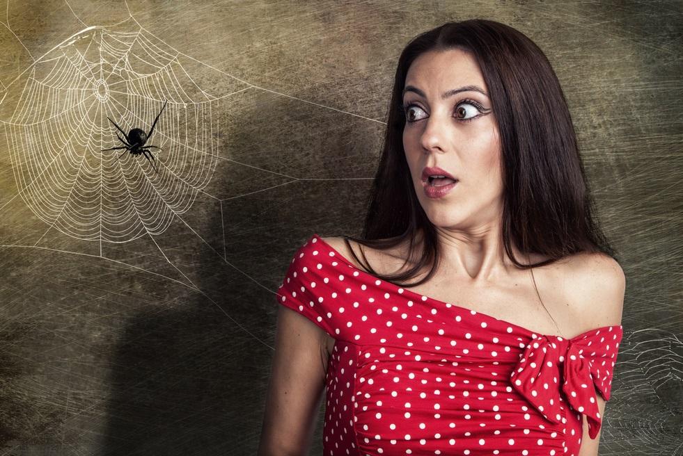 הצילו: עכבישים מסוכנים – כך תזהו אותם ותנהגו במקרה של עקיצה