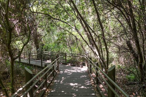 נהנים מהטבע ושמים את המוגבלות מאחור: טיולים עם נגישות