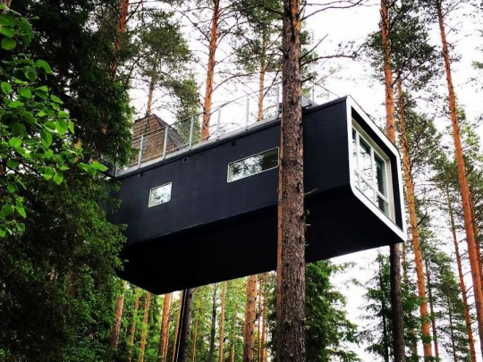 נאחז באוויר: הצצה ייחודית למלון העץ בשוודיה